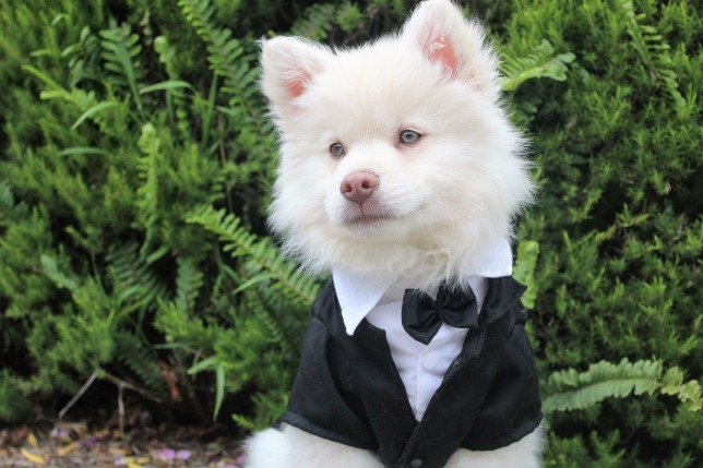 dog-1951211_1920